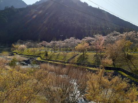 2020-4-9スメール桜