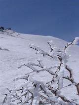 8樹氷と目国内