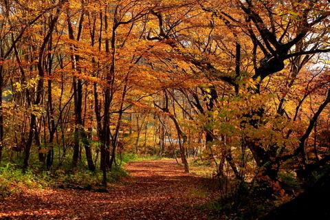 秋色燃える宮川渓谷歩道!(栃木県民の森)