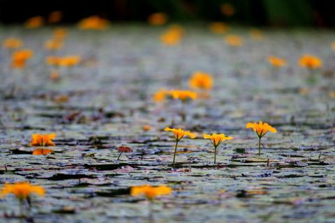 梅雨の最中の里山散歩!