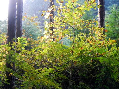 初秋の里山の森、みちくさんぽ!、和楽庵でお食事