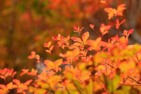 ミツモチ山で小さな秋を集めました!