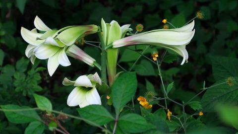 里山の森を歩く!(夏のお花がいっぱいです(#^^#))