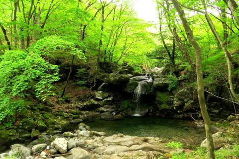 ヤマビルに震えた、深緑の森!(宮川渓谷歩道)