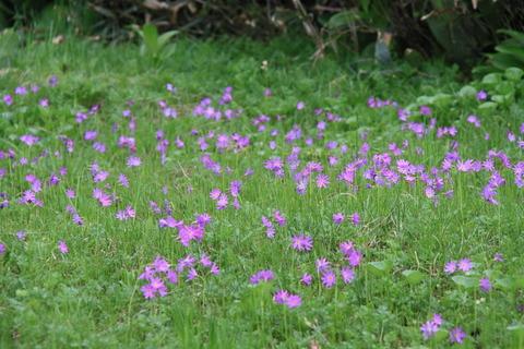 三岩岳から窓明山! 群生する花たちに囲まれて歩んだ癒しの山旅!