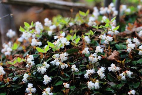 古賀志山(栃木百名山:ゆったり歩いて、新緑もまぶしい花の山!)
