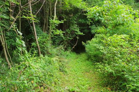 里山の森_2021.07.14_314