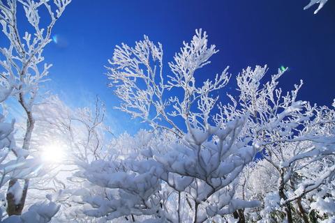 初冬に振る舞う霧氷の森!(那須:三本槍岳~大峠)