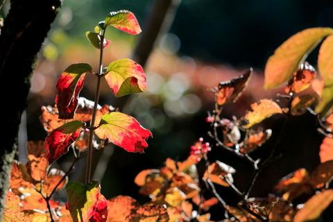 里山散歩:小さな秋色&森の中の輝く虹色で遊ぶ!