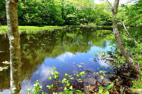緑深き矢の原湿原!