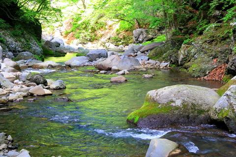 赤川渓谷線歩道(緑豊な渓の流れを見つめた!)