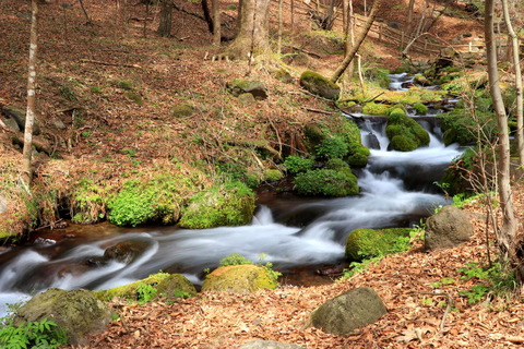 日本名水百選:尚仁沢湧水群を訪ねた!