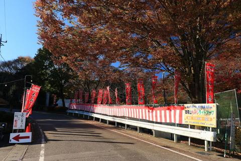 樹齢200年の巨木:土佐楓の秋の色(佐久山御殿山公園)