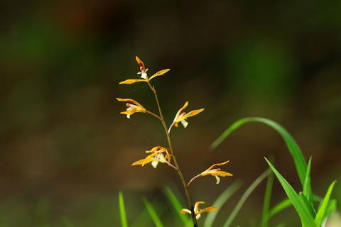 栃木百名山:新湯富士(大沼・ヨシ沼園地:新緑の森でお花を探す!)