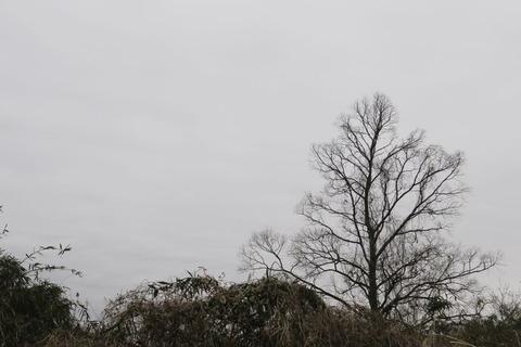 小さな春を感じよう!(里山の森を歩く!)
