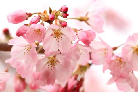 桜咲く里山散歩(喜連川丘陵にて!)