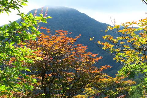 小さな秋色を見つけました。(高原山:釈迦ヶ岳~西平岳!)