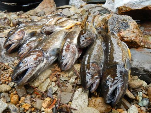 岩魚を求めて早春の渓!(栃木県北KT沢)