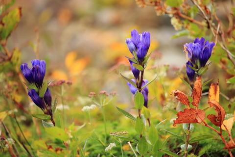 小さな秋を拾い集めて那須散歩!