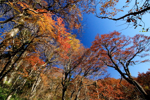 八溝の森で秋色奏でた💕