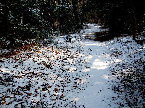 里山の森から足を伸ばした冬の里山!