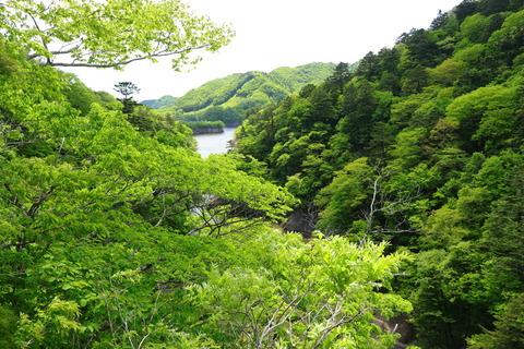 大正浪漫街道:新緑の渓谷の森をお散歩です!