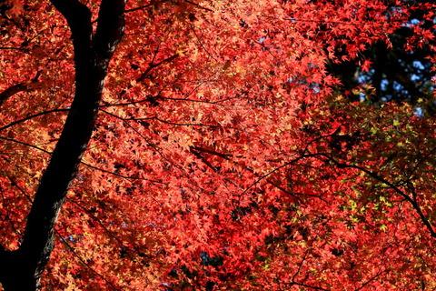 山籟橋(さんらいはし)の秋色!
