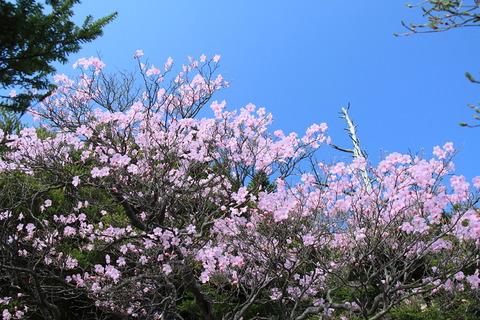 高原山(アカヤシオの祭典!明日への活力を育む色合いかな!))