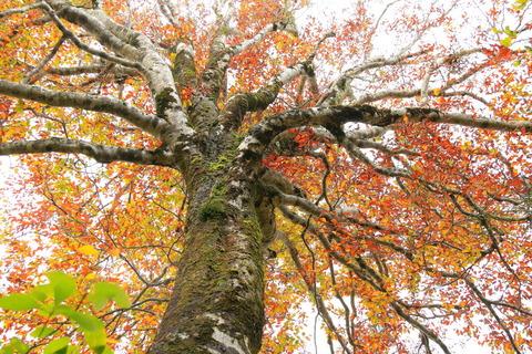 黄葉紅葉が冴えるわたる、浅草岳!