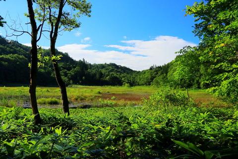 真夏の湿原散歩:part1!(福島県昭和村:矢ノ原湿原)