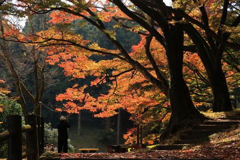 佐久山御殿山公園で古木の楓で秋色遊び!