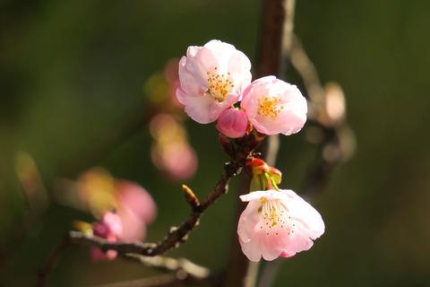 塩竃神社を訪ねて、桜咲く🌸🌸🌸
