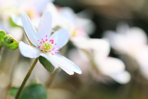 海抜0メートルからのアプローチ、花の山、角田山(新花の百名山:新潟県)
