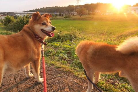 夕焼け散歩!(10月18日)
