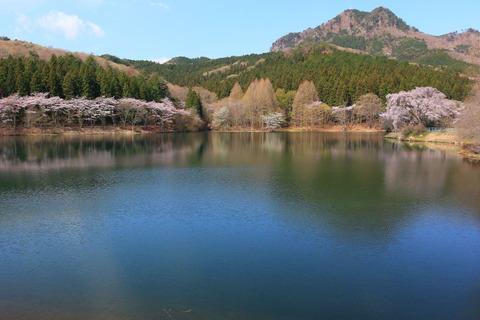 春の古賀志山、花散歩!(栃木百名山)