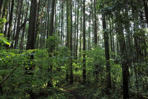 里山の森_2021.07.14_141