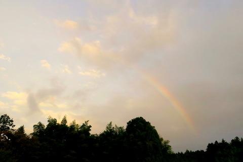 夕暮れの虹色散歩!(里山の森!)