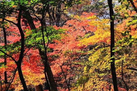 高原山山塊の秋!(守子神社界隈)