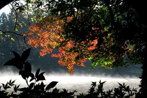 秋色始まる里山の森!
