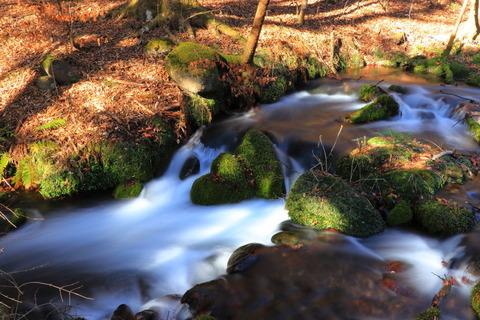 雪のない尚仁沢湧水群:冬枯れの暖かき森を歩いて!