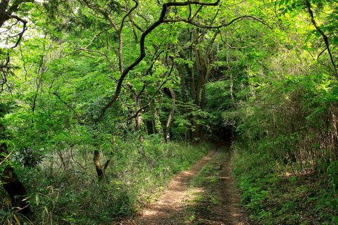 里山の森_19.05.16_131