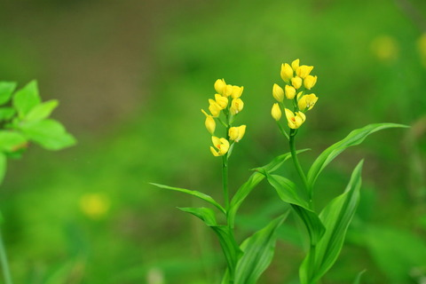 金と銀が集う森!(栃木県の森、宮川渓谷歩道)