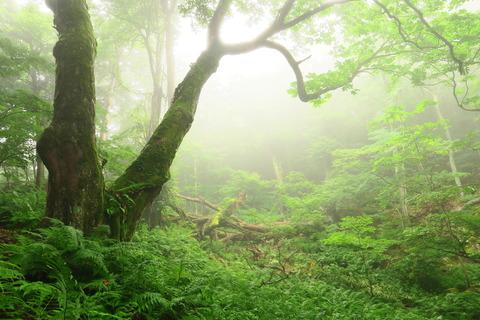 ガスに覆われた豊かな森を歩いた(高原山山塊)
