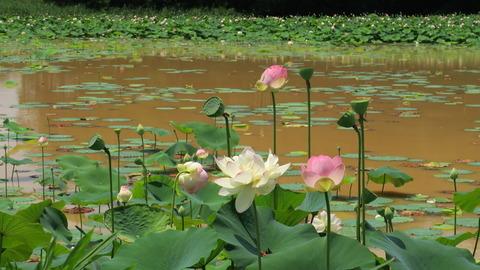 夏の風に香る花(ミセススローカム)