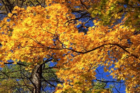 ミツモチ山であふれる秋色で遊ぶ!(栃木県民の森)