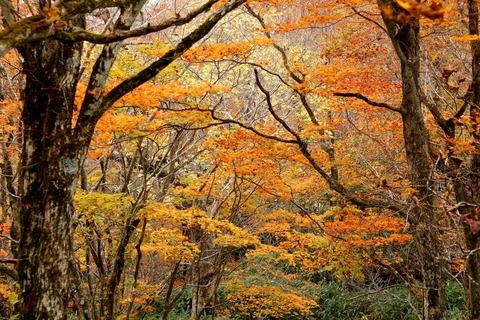 裏那須:樹林帯の紅葉を愛でる(三倉山~流石山:ミニ飯豊)