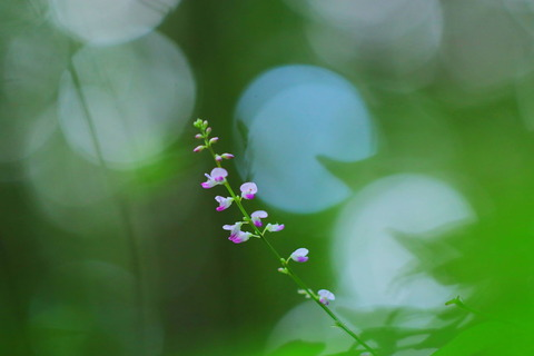 里山の森_2021.07.14_121