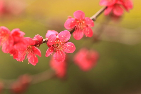 ふるさとの森公園で春を愛でる!