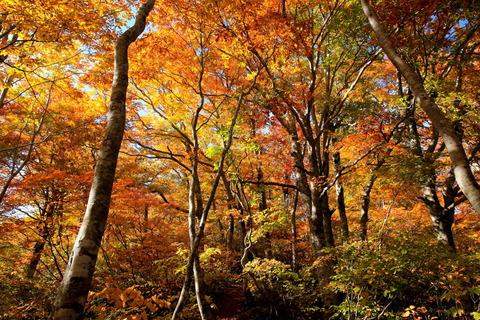 窓明山(福島県南会津町:素晴らしきブナ紅葉を愛でる)