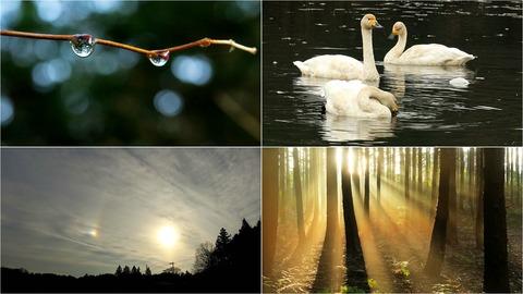 雨上がりの午後、里山散策!(白鳥&夕日の光芒!)